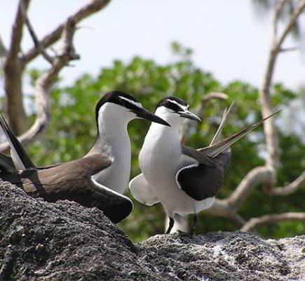 impacts_oiseaux